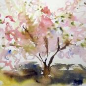 5/13 AM Cherry