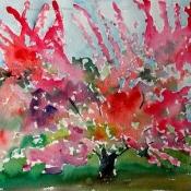 Cherry Tree D